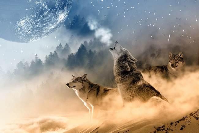 秋枫阁-孤狼